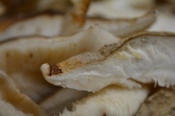 Il fungo secco Shiitake, questo sconosciuto dalle virtù eccezionali